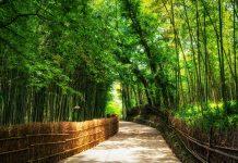 installer-bambou
